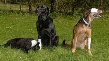 La demande complètement loufoque d'un maire sur les chiens de son village
