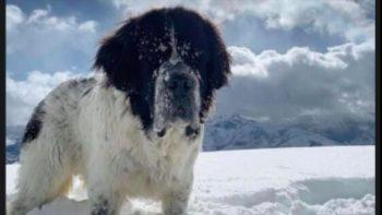 Un couple prépare une bouleversante surprise avant d'euthanasier sa chienne Maggie